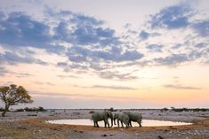 A family of elephants near a waterhole at sunset in Namibia's Etosha National Park.. Where to Go in 2018 - Bloomberg