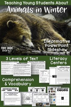 Powerful slideshow, close reading texts and lots of printables to teach your students how different animals survive the winter! #winter #animals #closereading