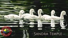 Fine Art show with Sandra Temple on Colour In Your Life featuring her am. Mixed Media Techniques, Painting Techniques, Your Paintings, Animal Paintings, New Fine Arts, Learn Art, Realistic Drawings, Artist Gallery, Painting Lessons