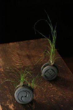 Japanese wild green plants