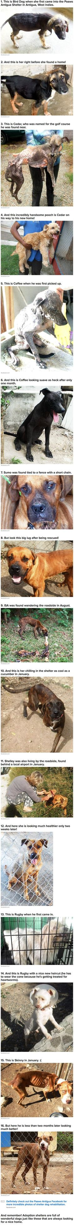16 Incredible Transformation Photos Of Shelter Dogs »» http://www.facebook.com/paaws.antigua