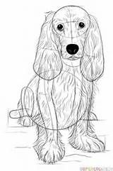 Pencil to Paper: How to Draw a Webkinz Cocker Spaniel - Level Easy