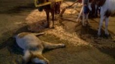 """Petition · City of Narón: Eliminate the """"carousel ponies"""" and other abuses of animals at parties! · Change.org"""
