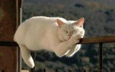 "Animal Planet @MeetAnimals ""I can sleep anywhere"" pic.twitter.com/hrxu7Gpz0P"