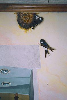 Golondrinas. www.maryline.be