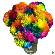 We love this latest addition to our range: rainbow chrysanthemums? #thehappynow #chrysanthemum #rainbowflowers #subscriptionbox
