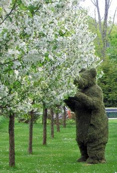 black bear farm... I made a 6ft bear topiary, but had to leave it at our house on Robin Hill when we sold it and moved :(