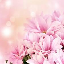 Картинки по запросу цветы фон розо белые воздушные
