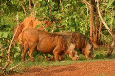 ghana mole national park