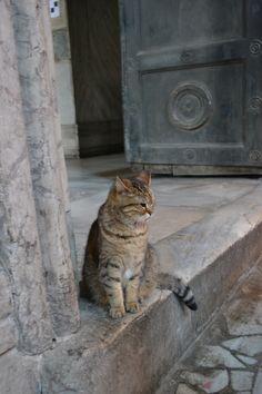 hagiasophiacat:  GUEST SUBMISSION Cat of Hagia Sophia