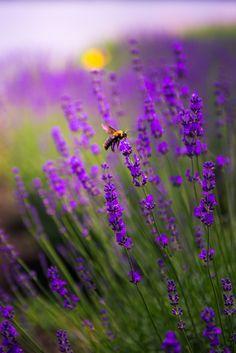 Best Flowers for Butterflies, Lavender Flowers That Attract Butterflies, Beautiful Butterflies, Amazing Flowers, Butterfly Feeder, Butterfly Bush, Growing Flowers, Planting Flowers, Amazing Gardens, Beautiful Gardens