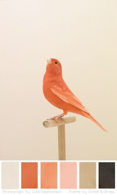 Color Play – Show Bird Photographs by Luke Stephenson « Cotton & Brass