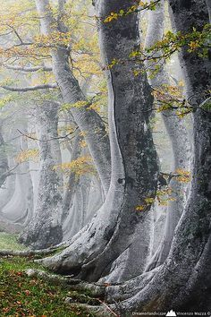 Ancient Forest, Abruzzo, Itália foto via donna.Is it just me, but I look at the base of the tree and imagine the tree's walking the earth! All Nature, Nature Tree, Amazing Nature, Flowers Nature, Beautiful World, Beautiful Places, Beautiful Pictures, Trees Beautiful, Unique Trees
