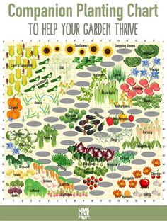 Find out which fruit and vegetables should and shouldn't be planted together with our companion planting chart for some of the most popular garden foods! garden Tomatoes Hate Cucumbers: Secrets of Companion Planting and Popular Planting Combinations