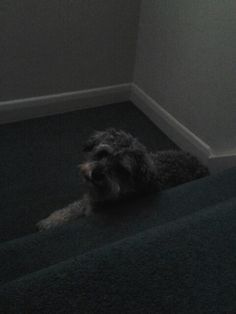 Ma boy sparky chillin' on da stairs!