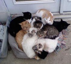It's a snuggle fest!