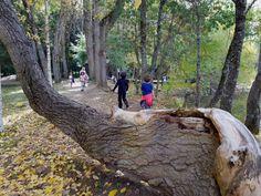 Ruta por el bosque finlandés de Rascafría, en Madrid, con niños Madrid, Sauna, Hiking Boots, Walks, Paths, Woods, Viajes, Hiking Shoes