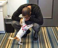 ¡Genial! Un hotel recibe a sus huéspedes con lindos perros rescatados en adopción | Seamos Más Animales... Como Ellos