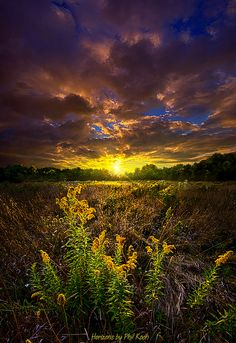 ~~Reason For Being ~ epic sunrise and golden lit meadow, Horizon series, Wisconsin by Phil~Koch~~
