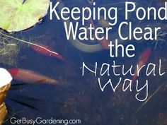 How to keep pond water clear naturally, without using expensive chemicals… Outdoor Ponds, Ponds Backyard, Garden Ponds, Garden Tips, Backyard Ideas, Outdoor Fountains, Pond Algae, Pond Plants, Pond Cleaning