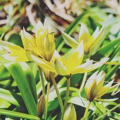 So trist im Garten da hilft Farbe  #Garten #Gartenliebe #tulpen #tulpe #tulpenliebe #tulips #tulip #blackandwhitephotography #tulpenzeit #tulipa #bloom #blooms #Gartenglück #Gartenzeit #Gartenträume #Gärten #Blume #Blumen #Blumenliebe #Blumenfotografie #blumenzauber #nature  #naturelover  #naturephotography  #flowers #flower #naturesbeauty  #naturelove  #PictureoftheDay  #photooftheday