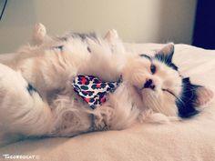 Lazy day @yummypets