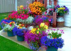 Love, kindness, compassion are beautiful spiritual flowers http://bellofpeace.org