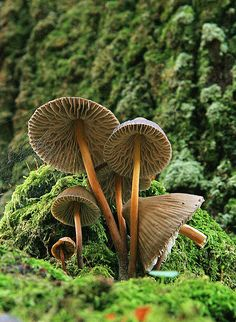 Bettcha there are fairies around here somewhere! Mushrooms. Photo by Jose Antonio Diz Orge via Biologist Barbie