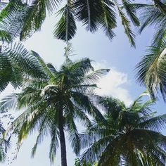 Palm family https://www.instagram.com/tatjanakreuzmayr/
