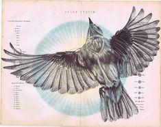 bic biro bird drawing collection... on Behance