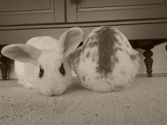 Bunny face, bunny rump - September 25, 2012
