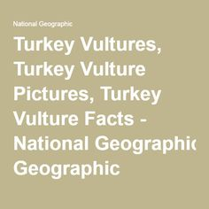 Turkey Vultures, Turkey Vulture Pictures, Turkey Vulture Facts - National Geographic