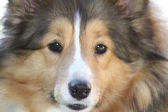 My precious pup, Kobi!