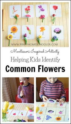 Identifying Common Flowers for Preschoolers Heloing kids identify common flowers Montessori Trays, Montessori Toddler, Montessori Activities, Toddler Activities, Montessori Bedroom, Montessori Elementary, Montessori Education, Free Preschool, Preschool Classroom