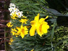 Spring @ Finland