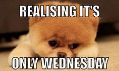 Realising it's only Wednesday. #Humpdaymemes #Funnyhumpdaymemes #Wednesdaymemes #Wednesdaymeme #Funnywednesdaymemes #Wednesdayevememes #Wednesdaymemesforwork #Wednesdayworkmemes #Wednesdaymorningmemes #Wednesdaymemescute #Funnywednesdayimages #Funnywednesdayquotes #Happywednesdaymemes #Memes #Funnymemes #Wednesdaymemespositive #Bestwednesdaymemes #Wednesdaymemesanimals #Memes2020 #Wednesdaysmeme #Funnyquotes #Sarcasticquotes #Hilariousquotes #Humorousquotes #therandomvibez #Laughablequotes