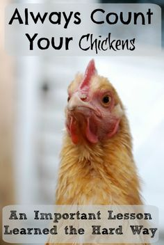 Always Count your Chickens: An important lesson learned the hard way