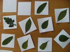 Blättermemory  (Basteltipp Nr. 5)