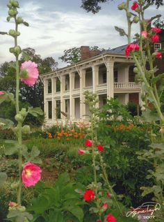 Beauty on the pantation Old Southern Homes, Southern Plantation Homes, Southern Mansions, Southern Plantations, Southern Comfort, Southern Belle, Plantation Houses, Southern Charm, Southern Living