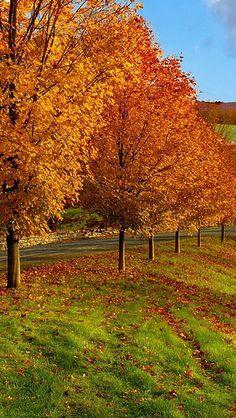 autumn_trees_grass_84687_640x1136   by vadaka1986