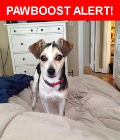 Please spread the word! Lito was last seen in Columbia, TN 38401.    Nearest Address: Near Sheddan Dr & Cayce Ln