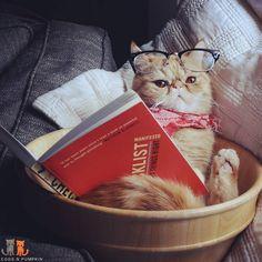 cat reading book via mreggsthecat on instagram