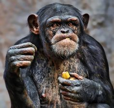 Photograph banana everyday by Klaus Wiese on 500px