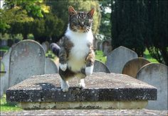 the cemetery cat and you better run