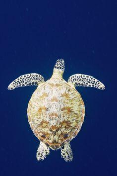 Green Sea Turtle by Antti Pulkkinen