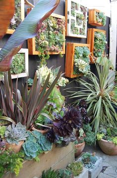 I love succulents and cannot wait to try and see how they do in our climate. small space vertical garden wall--love the vertical succulents garden!