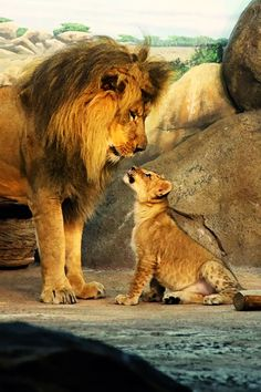 Looking Up To Dad - perfect picture that captures the awe, respect and reverence a child should have for their Dad!