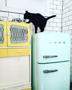 Kitchen #smeg #vintage #kitchen #larder  #tiles #buddythecat Kitchen Larder, Vintage Kitchen, Washing Machine, Tiles, Sweet Home, Home Appliances, Room Tiles, House Appliances, House Beautiful