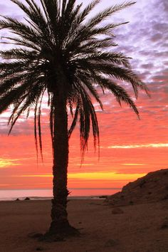 ✮ Tropical palm tree on the beach, back lit by a colorful daybreak sky, Cabo San Lucas, Mexico