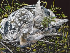 Camo Fawn - Judy Fairley, scratchboard~ This artist is amazing and I love her pictures. I met her at Dahmen Barn and she is really cool. I'd love to take lessons from her.